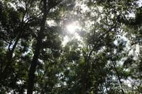 Rimbunnya pohon mampu menahan panas matahari