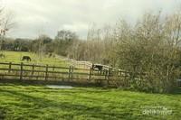 Suasana pedesaan di Bourton. Bahkan hewan ternak pun diberi baju penghangat.