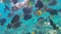 Beragam ikan berwarna-warni menambah cantik bawah laut Pulau Karampuang