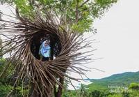 Sarang burung ikonik dari Bukit Love