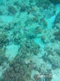 Kecerahan di spot snorkeling Pulau Kambing
