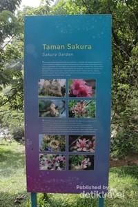 Informasi mengenai Taman Sakura Kebun Raya Cibodas