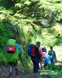 Menapaki hutan di Prau