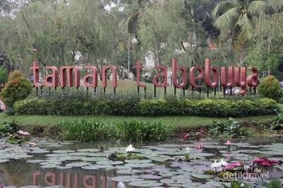 Tabebuya, Si Cantik di Jakarta Selatan