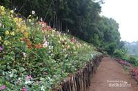 saat sedang mekar bunga warna-warni memenuhi taman ini.