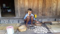 Kemiri salah satu hasil bumi di Kampung Bena