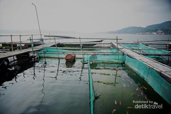 Tambak ikan mas dan gurame