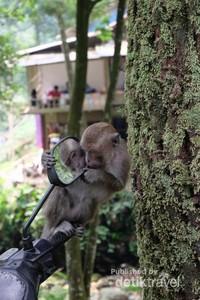 Kita bisa juga melihat tingkah lucu monyet-monyet di sekitar curug