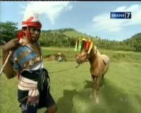 Derap Langkah Kuda Sumbawa