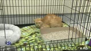Seekor Kucing Terangkut Kontainer dari Filipina ke AS