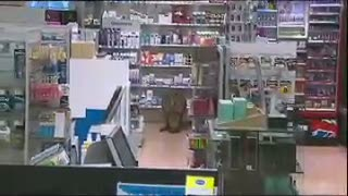 Kanguru Sakit Tersesat di Apotek Bandara