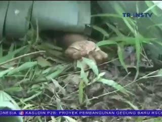 Dua Bocah Ditemukan Tewas dalam Hutan dengan Luka Gorok di Leher