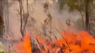 Kehausan, Seekor Koala Selamat dari Amukan Api