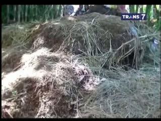 Gundukan Tanah Misterius Berisi Tulang Belulang Digali Setelah 15 Tahun