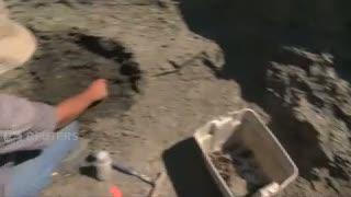 Dinosaurus Jenis Baru Ditemukan di Kanada