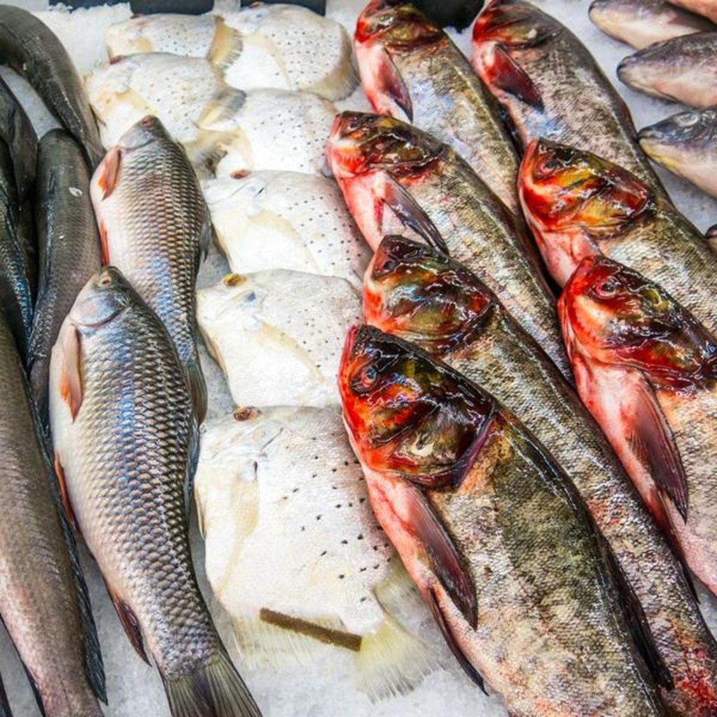 Go Fishy! Studi Ungkap Makan Ikan Bantu Atasi Nyeri Sendi