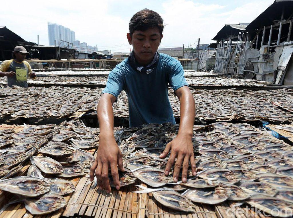Terkendala Hujan, Produksi Ikan Asin di Angke Kembali Normal