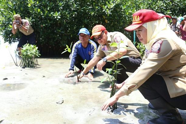 Mensos Tanam Manggrove di Pulau Pramuka