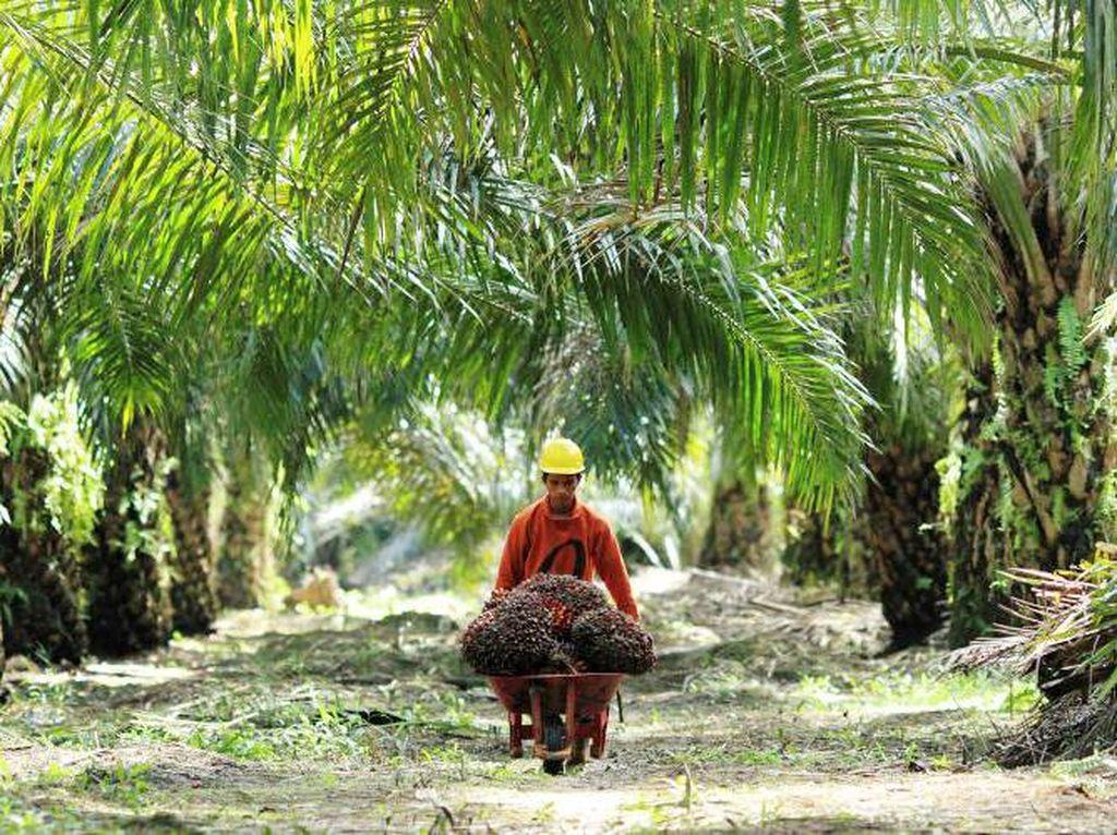 Direktur Eksekutif Gabungan Pengusaha Kelapa Sawit Indonesia (GAPKI), Fadhil Hasan meminta pemerintah harus meningkatkan kampanye sawit Indonesia. Karena, industri sawit merupakan andalan Indonesia. (Foto: dok. GAPKI)