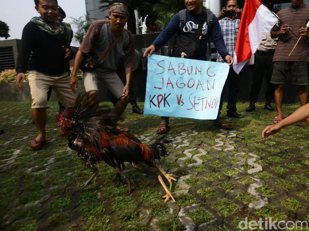Ayam jago itu bertarung di tengah-tengah massa aksi.