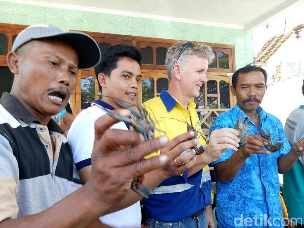 Tak Lagi Tangkap Baby Lobster, Nelayan Beralih ke Lobster Air Tawar