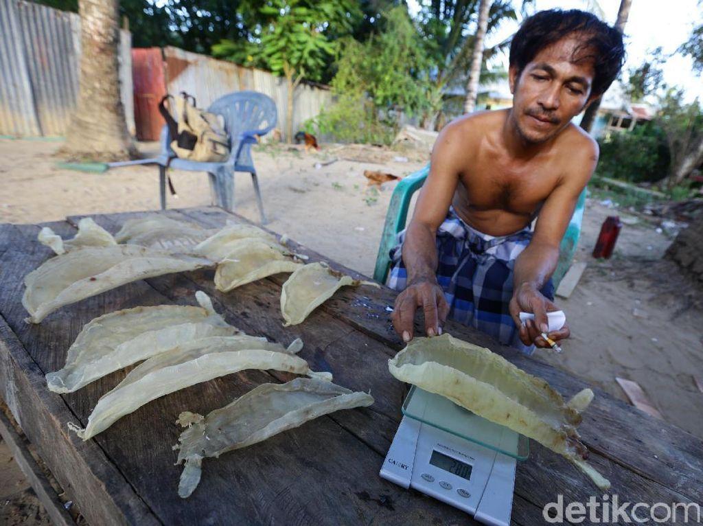 Saat berakhirnya musim panas, sejumlah nelayan di Merauke juga berlomba untuk mencari ikan gulama untuk diambil gelembung perutnya. Gelembung tersebut harganya bisa mencapai puluhan juta rupiah per kilogram.
