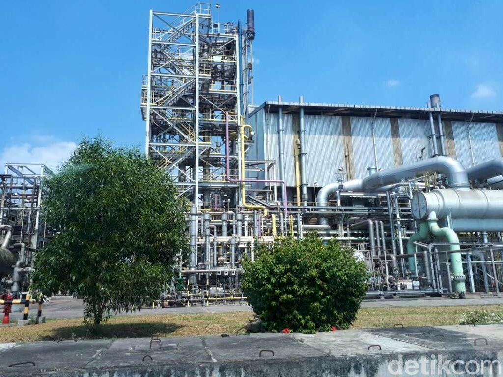Kapasitas produksi Pupuk Kujang untuk urea mencapai 1.140.000 ton per tahun, pupuk NPK 200.000 ton per tahun, pupuk organik 20.000 ton per tahun. Angka tersebut melebihi kebutuhan pupuk untuk petani di kawasan Jawa Barat dan Banten.