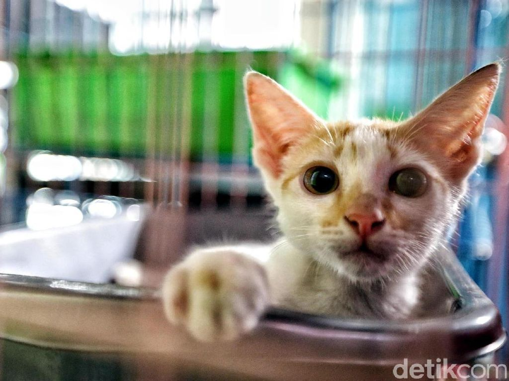 Suara-suara kucing yang mengeong ramai terdengar di tempat penitipan hewan tersebut.