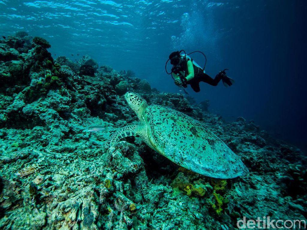 Ini 4 Tempat Diving Indonesia yang Masuk 10 Destinasi Terbaik Asia