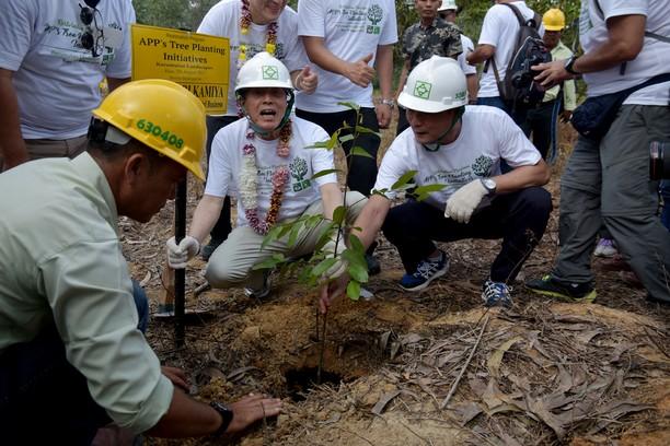 Penanaman 10 Ribu Pohon di Palalawan Riau