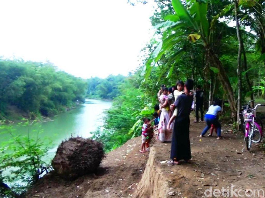 Tim BSKDA Jateng menduga buaya yang dilihat warga di Sungai Lukulo, Kabupaten Kebumen, pernah dipelihara orang, karena sungai ini bukan habitat buaya. Namun namanya juga warga, Sungai Lukulo malah menjadi perhatian. Banyak warga yang berdatangan ingin melihat buaya ini (Rinto Heksantoro/detikcom)