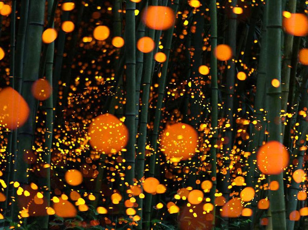 Kumpulan foto kunang-kunang di Jepang. (Foto:spicedpumpkins/boredpanda)