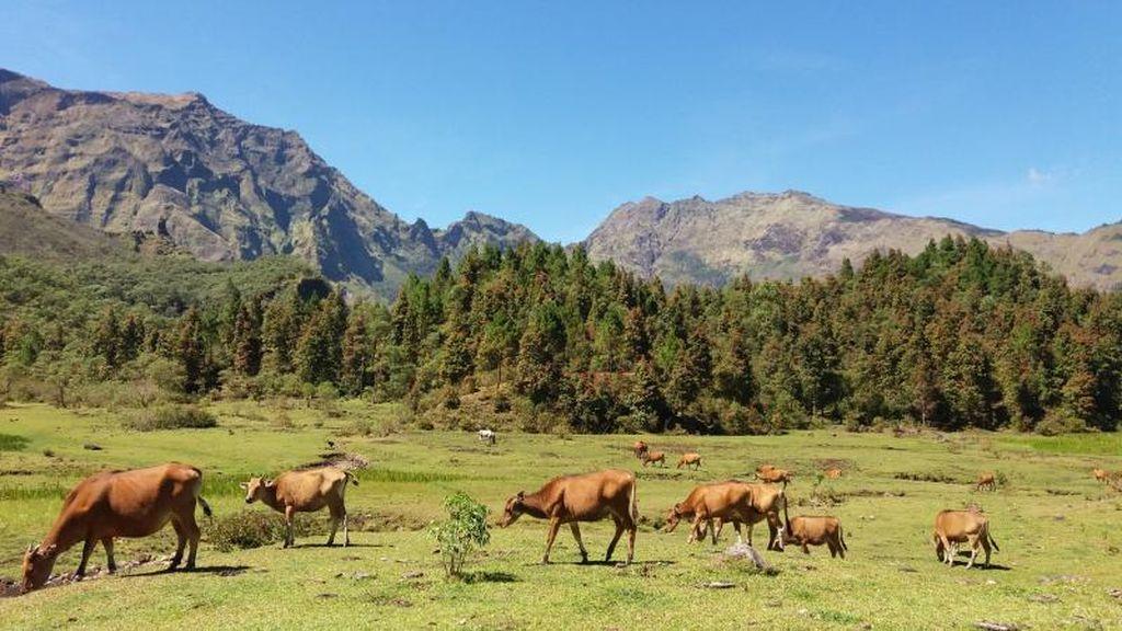 Bukan di Luar Negeri, Ini di Sulawesi Selatan