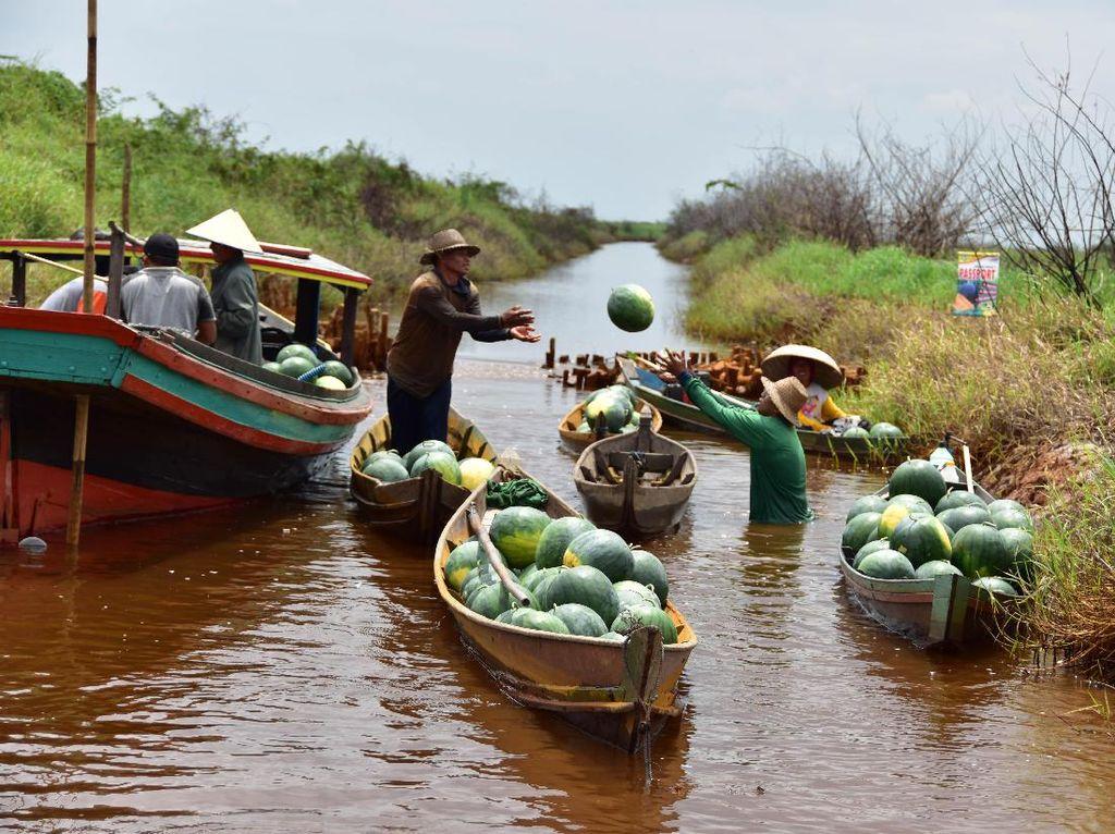 Petani mengangkut semangka hasil panen menggunakan sampan menuju muara sungai Balum di Desa Baruh Jaya, Kabupaten Hulu Sungai Selatan, Kalimantan Selatan. Foto: dok. Ewindo