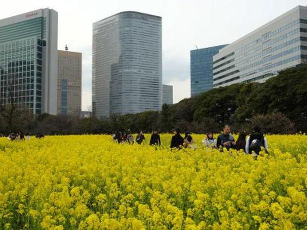 Salah satu taman di salah satu sudut Tokyo. Kota ini menjadi sasaran ancaman penenggelaman pulau oleh Korut menggunakan nuklir. Foto: AFP