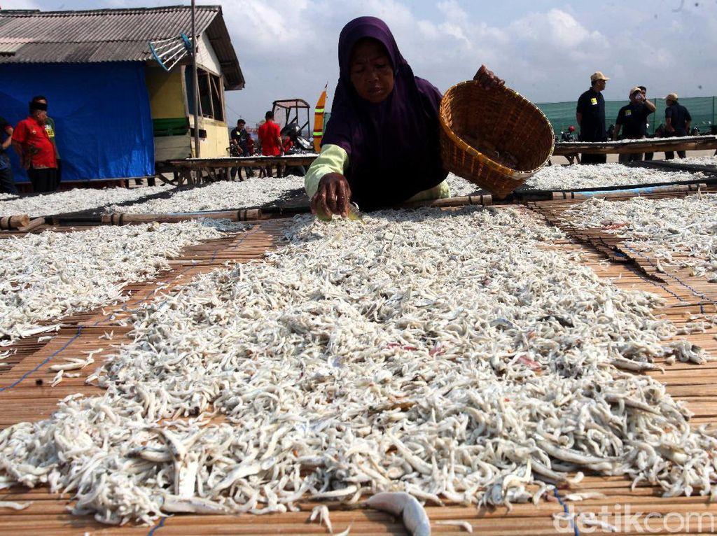 Melihat Produksi Ikan Teri di Pulau Pasaran