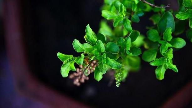 10 Super Herba Ini Punya Segudang Manfaat untuk Kesehatan Tubuh