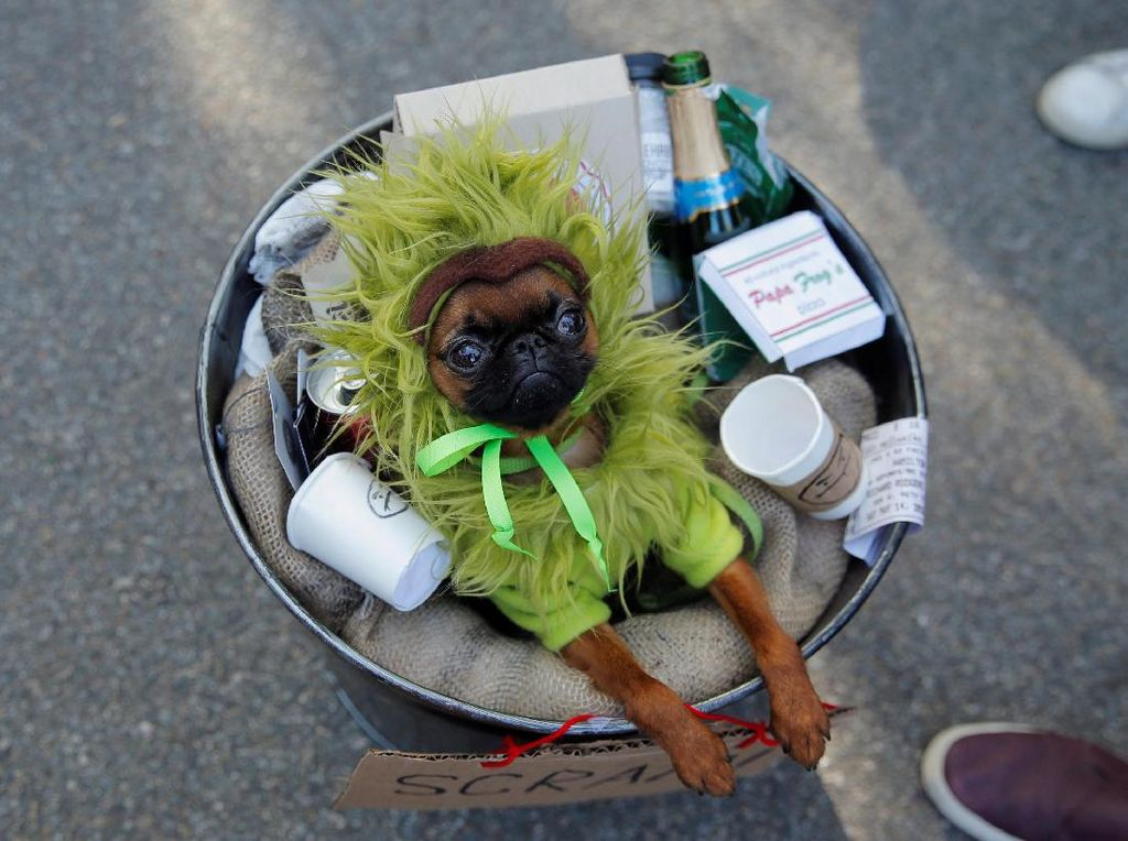 Lucunya! Anjing-anjing Ini Cosplay di Parade Halloween